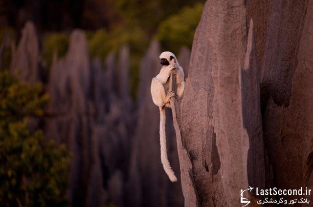 جنگلهای سنگ ماداگاسکار