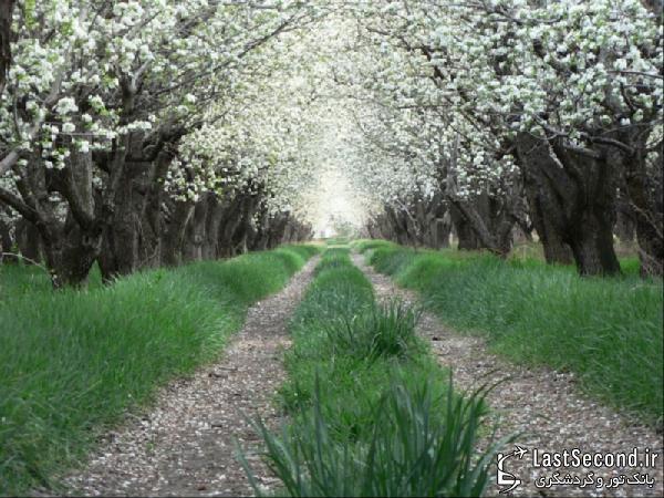 زیباترین و دیدنی ترین مناطق ایران Iran - باغ گلابی ، شیراز