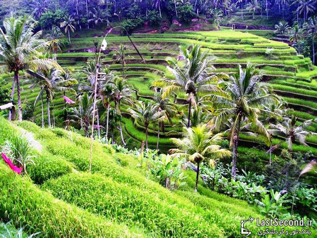 جزیره زیبای بالی