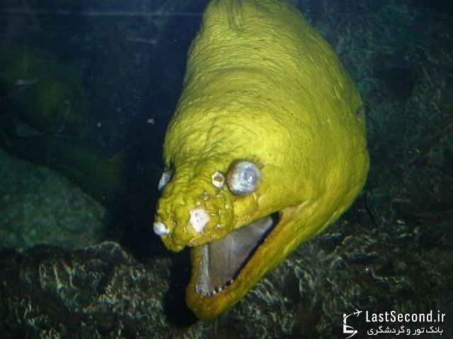 بد ریخت ترین و زشت ترین ماهی های دنیا