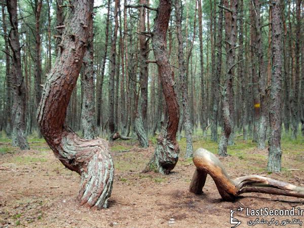 جنگلهای رقصان