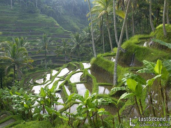 Bali - بالی