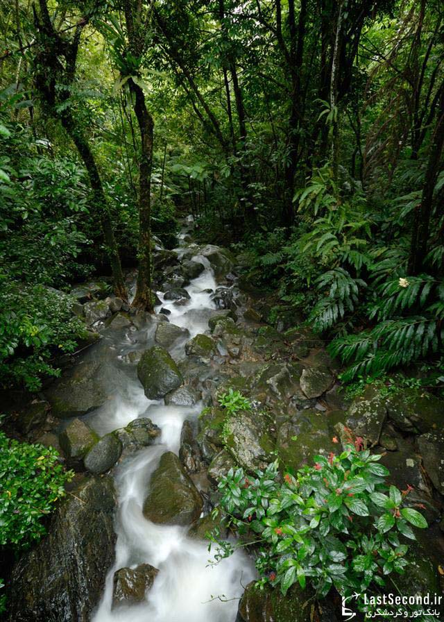 پارک ملی ال یانگ،پورتوریکو